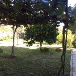 IMG_8345